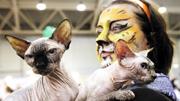 纳尼!爱猫是一种病?